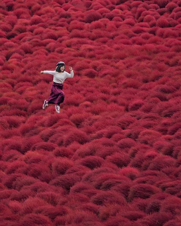 Đẹp nhất Nhật Bản mùa này chính là đồi cỏ Kochia đỏ rực, du khách đua nhau check-in đông không thấy lối đi - Ảnh 12.