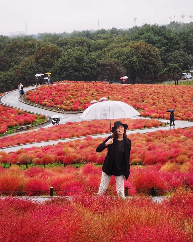 Đẹp nhất Nhật Bản mùa này chính là đồi cỏ Kochia đỏ rực, du khách đua nhau check-in đông không thấy lối đi - Ảnh 15.