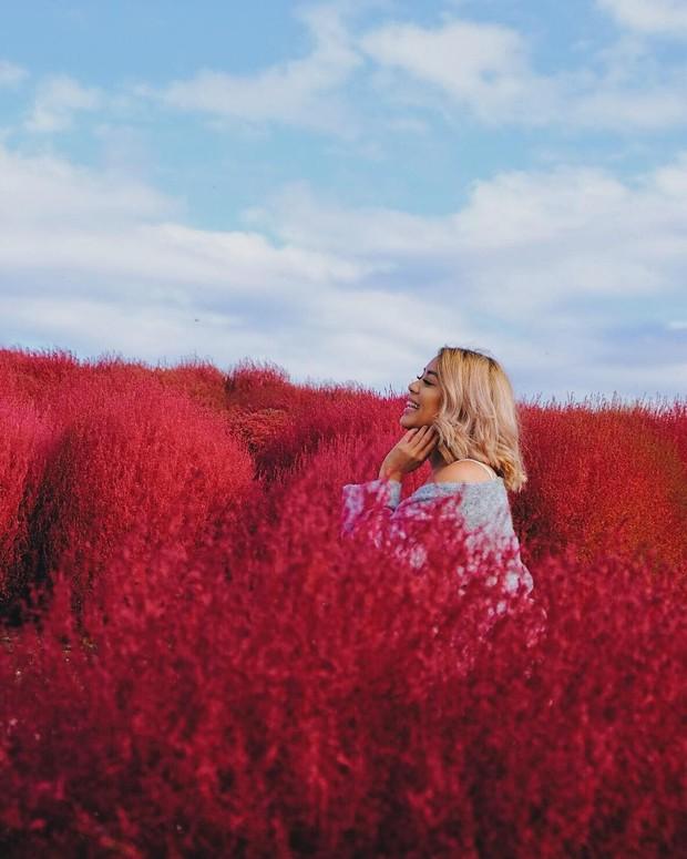Đẹp nhất Nhật Bản mùa này chính là đồi cỏ Kochia đỏ rực, du khách đua nhau check-in đông không thấy lối đi - Ảnh 6.