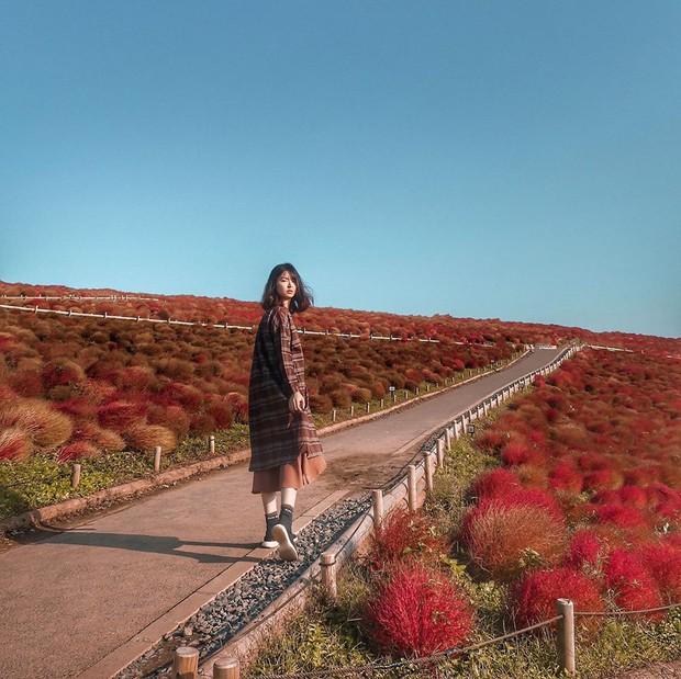Đẹp nhất Nhật Bản mùa này chính là đồi cỏ Kochia đỏ rực, du khách đua nhau check-in đông không thấy lối đi - Ảnh 13.