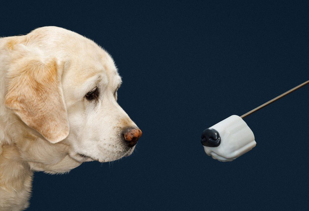 Thiệt hại hàng tỷ USD mà khoa học vẫn chưa tìm được công nghệ nào thính như mũi chó - Ảnh 2.
