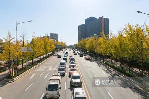 Giả gái xuất sắc đã đành, BB Trần bắt trend du lịch còn đỉnh hơn: Đến Hàn Quốc thời điểm hot nhất năm, chụp bừa cũng có 7749 ảnh đẹp - Ảnh 6.