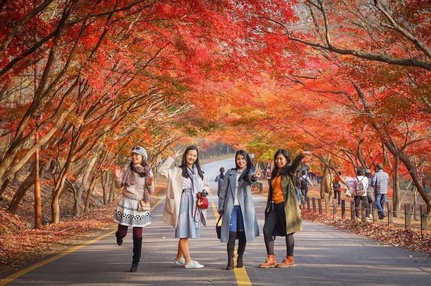 Giả gái xuất sắc đã đành, BB Trần bắt trend du lịch còn đỉnh hơn: Đến Hàn Quốc thời điểm hot nhất năm, chụp bừa cũng có 7749 ảnh đẹp - Ảnh 7.