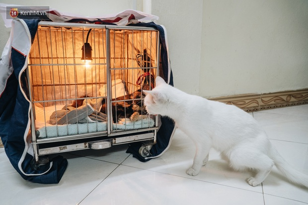 Nhà Mèo và câu chuyện cô chủ nhặt nuôi hàng trăm chú mèo bệnh tật về chăm sóc: Nếu sống, con sẽ được ở lại đây mãi mãi - Ảnh 12.