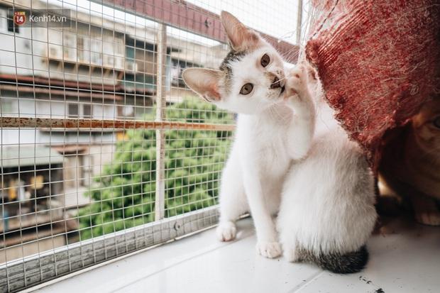 Nhà Mèo và câu chuyện cô chủ nhặt nuôi hàng trăm chú mèo bệnh tật về chăm sóc: Nếu sống, con sẽ được ở lại đây mãi mãi - Ảnh 8.