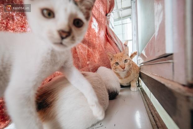 Nhà Mèo và câu chuyện cô chủ nhặt nuôi hàng trăm chú mèo bệnh tật về chăm sóc: Nếu sống, con sẽ được ở lại đây mãi mãi - Ảnh 6.