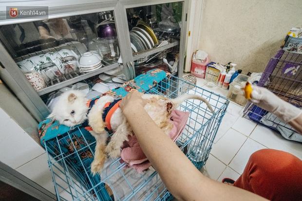 Nhà Mèo và câu chuyện cô chủ nhặt nuôi hàng trăm chú mèo bệnh tật về chăm sóc: Nếu sống, con sẽ được ở lại đây mãi mãi - Ảnh 4.