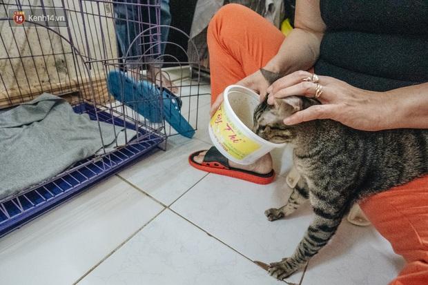 Nhà Mèo và câu chuyện cô chủ nhặt nuôi hàng trăm chú mèo bệnh tật về chăm sóc: Nếu sống, con sẽ được ở lại đây mãi mãi - Ảnh 9.