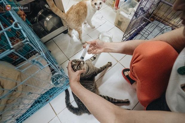 Nhà Mèo và câu chuyện cô chủ nhặt nuôi hàng trăm chú mèo bệnh tật về chăm sóc: Nếu sống, con sẽ được ở lại đây mãi mãi - Ảnh 10.