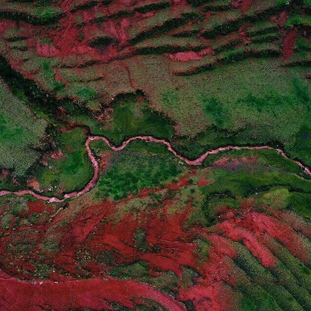 """Giận bay màu là có thật: Dòng sông đỏ như máu ở Peru cứ vài tháng lại… nhạt đi, du khách phải """"chạy xô"""" mới kịp ngắm - Ảnh 4."""