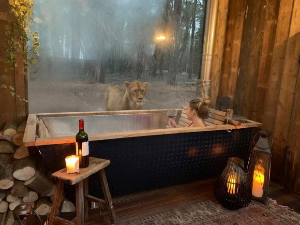 """Sốc: Một khách sạn cho phép du khách sống chung với hổ và sư tử, tưởng """"nói điêu"""" nhưng lại hoàn toàn có thật ở Anh - Ảnh 4."""
