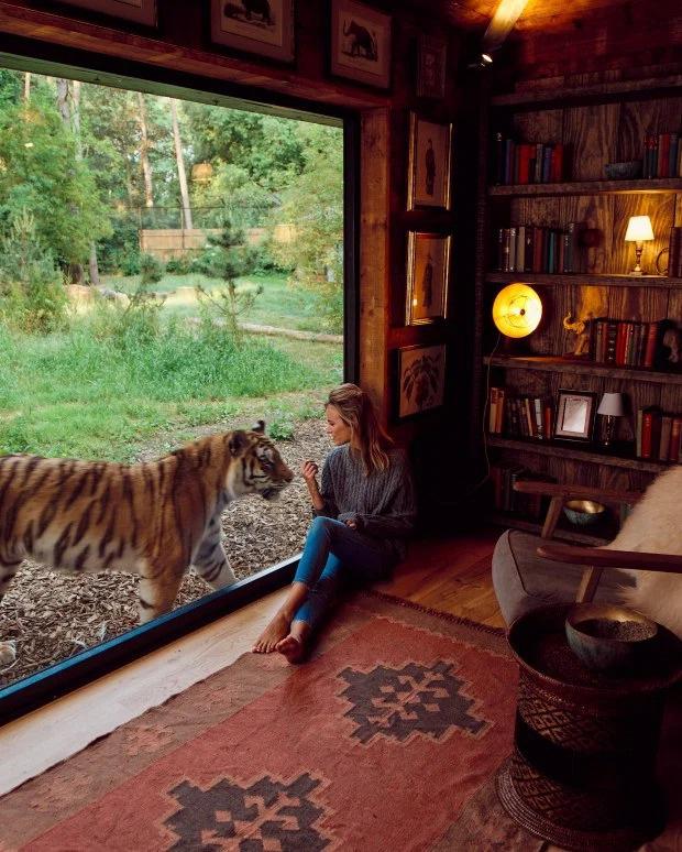 """Sốc: Một khách sạn cho phép du khách sống chung với hổ và sư tử, tưởng """"nói điêu"""" nhưng lại hoàn toàn có thật ở Anh - Ảnh 1."""