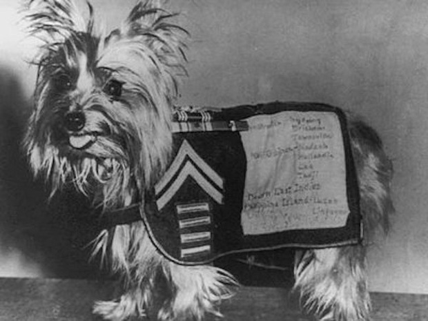 Chú chó tí hon bỗng chốc trở thành siêu chiến binh trong Thế chiến II - Ảnh 6.