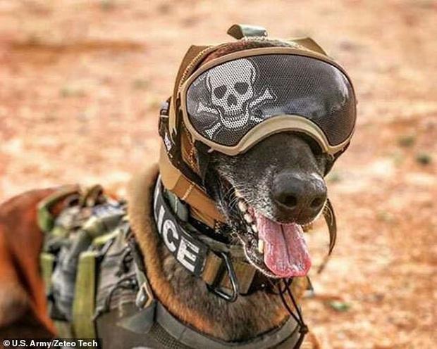 Chó đặc vụ của quân đội Mỹ sẽ được đội những chiếc mũ giáp cực ngầu: Tưởng cho vui nhưng lý do và công dụng đằng sau là cực kỳ nhân văn - Ảnh 2.