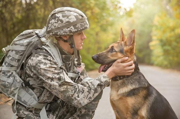 Chó đặc vụ của quân đội Mỹ sẽ được đội những chiếc mũ giáp cực ngầu: Tưởng cho vui nhưng lý do và công dụng đằng sau là cực kỳ nhân văn - Ảnh 1.