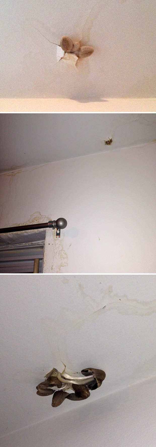Những trường hợp thảm họa nhà trọ nhìn mà tức: Trăn rủ nhau quấn quýt trên trần nhà, nấm mọc chi chít khắp nơi và hàng rào có như không  - Ảnh 1.