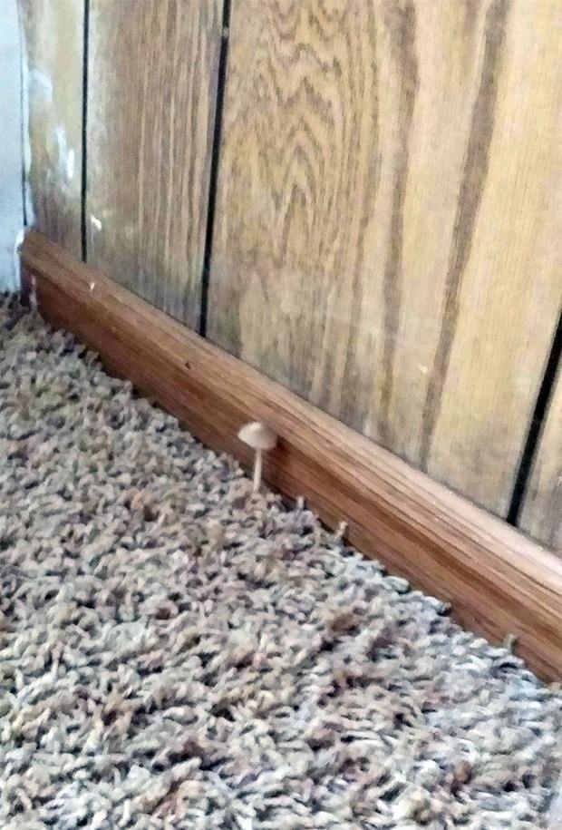 Những trường hợp thảm họa nhà trọ nhìn mà tức: Trăn rủ nhau quấn quýt trên trần nhà, nấm mọc chi chít khắp nơi và hàng rào có như không  - Ảnh 9.