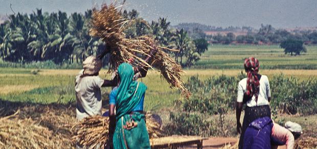Thảm họa dân nghèo tự tử hàng loạt tại Ấn Độ: Phận góa phụ mất chồng, tuyệt vọng giữa nạn lạm dụng tình dục mà không được bảo vệ - Ảnh 6.