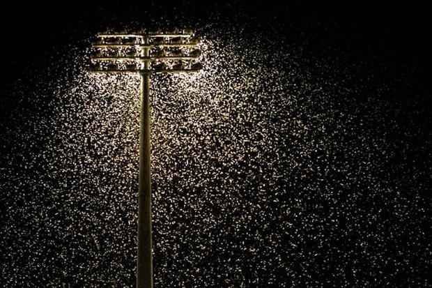 Ô nhiễm ánh sáng đang đẩy côn trùng đến bờ vực tuyệt chủng - Ảnh 1.