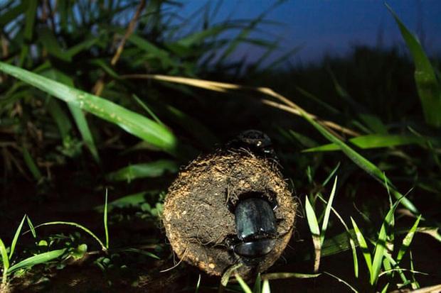 Ô nhiễm ánh sáng đang đẩy côn trùng đến bờ vực tuyệt chủng - Ảnh 2.