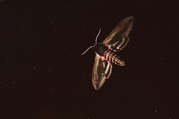 Ô nhiễm ánh sáng đang đẩy côn trùng đến bờ vực tuyệt chủng - Ảnh 3.