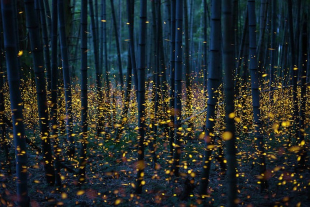 Ô nhiễm ánh sáng đang đẩy côn trùng đến bờ vực tuyệt chủng - Ảnh 4.