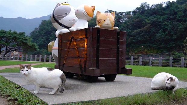Những tọa độ du lịch tràn ngập các boss: nơi chỉ toàn chó, mèo, lợn... thậm chí còn nhiều hơn cả số người dân sống ở đó - Ảnh 6.