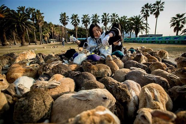 Những tọa độ du lịch tràn ngập các boss: nơi chỉ toàn chó, mèo, lợn... thậm chí còn nhiều hơn cả số người dân sống ở đó - Ảnh 14.