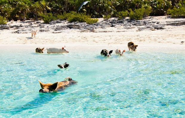 Những tọa độ du lịch tràn ngập các boss: nơi chỉ toàn chó, mèo, lợn... thậm chí còn nhiều hơn cả số người dân sống ở đó - Ảnh 20.