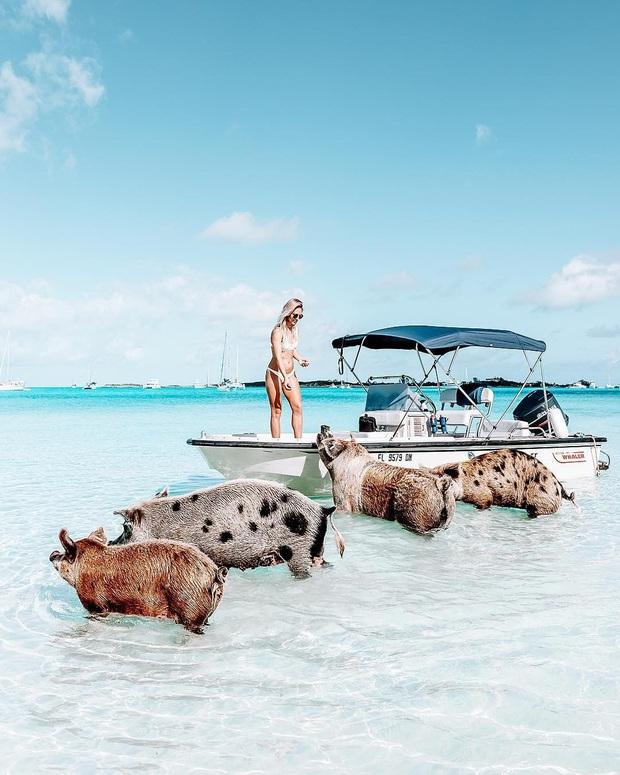 Những tọa độ du lịch tràn ngập các boss: nơi chỉ toàn chó, mèo, lợn... thậm chí còn nhiều hơn cả số người dân sống ở đó - Ảnh 21.