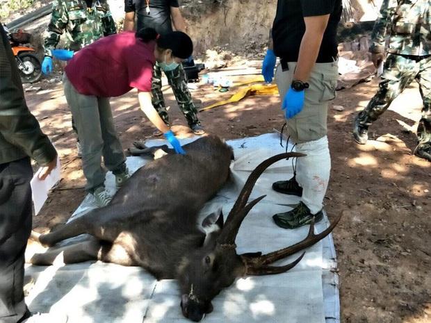 Mổ xác nai 200kg ở Thái Lan nhận được 7kg rác nhựa và cả... quần lót: Đau lòng vì tác động của loài người đã là quá lớn - Ảnh 1.