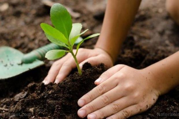 """""""Phản đối trồng cây là một phong trào cộng đồng"""" dù đồng ý hay không, bạn cũng phải hiểu đúng để thế giới có thêm một hi vọng xanh. - Ảnh 5."""