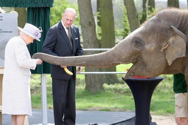Những khoảnh khắc ấn tượng của vợ chồng Nữ hoàng Anh nhân dịp kỷ niệm đám cưới 72 năm, minh chứng cho tình yêu vĩnh cửu là có thật - Ảnh 16.