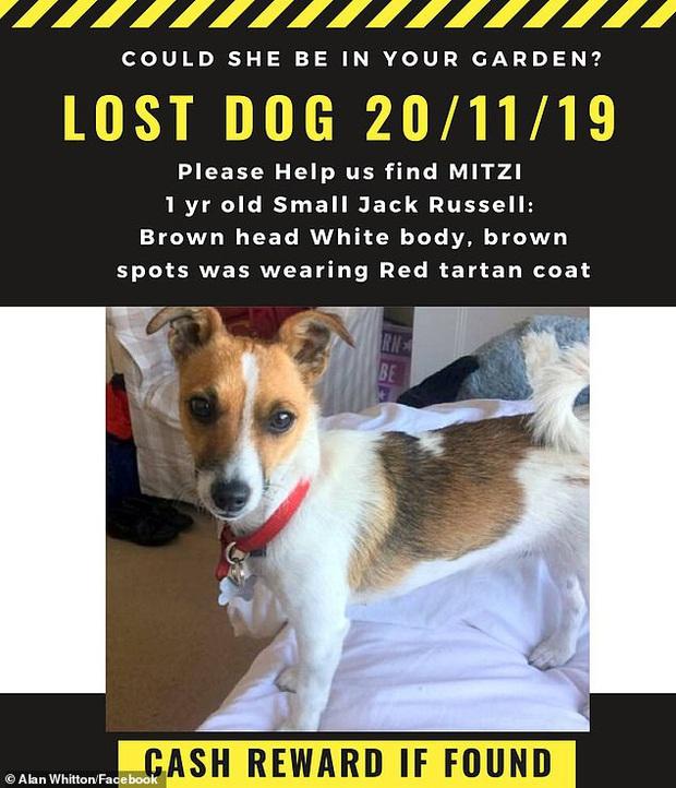Miệt mài tìm chó cưng mất tích 2 ngày trời, phản ứng của người đàn ông sau khi cứu được nó ra khỏi hố sâu khiến ai cũng cảm động - Ảnh 1.