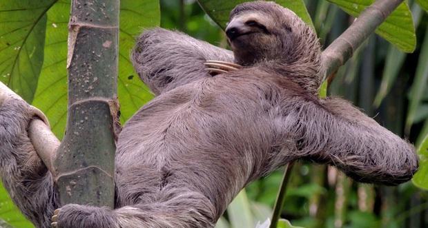 Phát hiện con lười trốn dưới hố xí xây trong rừng Amazon, những gì xảy ra sau đó khiến bất kỳ ai cũng thấy... buồn nôn đến tột độ - Ảnh 1.