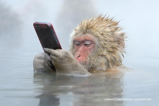 """Bức ảnh """"khỉ tuyết cầm iPhone"""" này là thật hay ghép? Nếu thật, ai là người chụp và làm thế nào hay vậy? - Ảnh 1."""