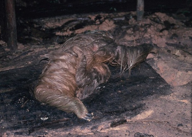 Phát hiện con lười trốn dưới hố xí xây trong rừng Amazon, những gì xảy ra sau đó khiến bất kỳ ai cũng thấy... buồn nôn đến tột độ - Ảnh 2.