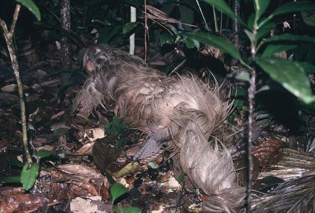 Phát hiện con lười trốn dưới hố xí xây trong rừng Amazon, những gì xảy ra sau đó khiến bất kỳ ai cũng thấy... buồn nôn đến tột độ - Ảnh 3.