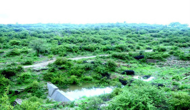 Phong tục tập quán lạ: Làng nghèo ở Ấn Độ trồng 111 cây xanh mỗi một bé gái được sinh ra - Ảnh 1.