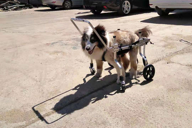 Hành trình từ công nhân nghèo khó trở thành ông vua xe lăn cho thú cưng ở Trung Quốc - Ảnh 1.