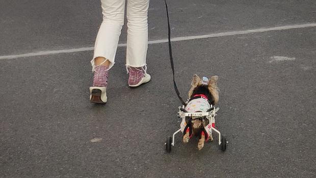 Hành trình từ công nhân nghèo khó trở thành ông vua xe lăn cho thú cưng ở Trung Quốc - Ảnh 3.