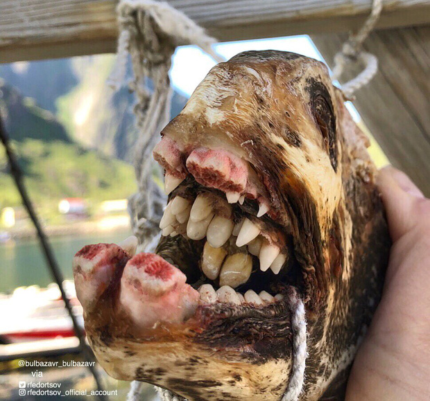 Bộ sưu tập những sinh vật kỳ dị dưới biển của anh ngư dân mỗi dịp căng buồm ra khơi mang về - Ảnh 6.