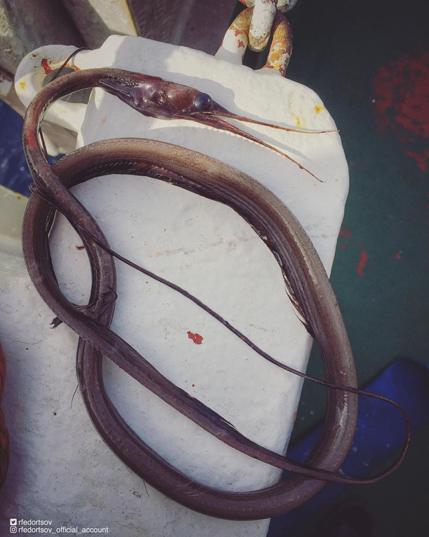 Bộ sưu tập những sinh vật kỳ dị dưới biển của anh ngư dân mỗi dịp căng buồm ra khơi mang về - Ảnh 8.