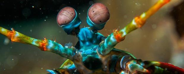 Cuối cùng thì khoa học đã biết được bí mật của sinh vật có cặp mắt vô lý nhất mọi thời đại - Ảnh 1.