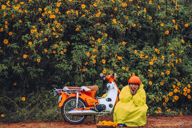 Bất chấp trời mưa, chàng photographer cho ra đời bộ ảnh chụp cùng hoa dã quỳ với concept có 1-0-2 khiến dân tình bấn loạn - Ảnh 2.