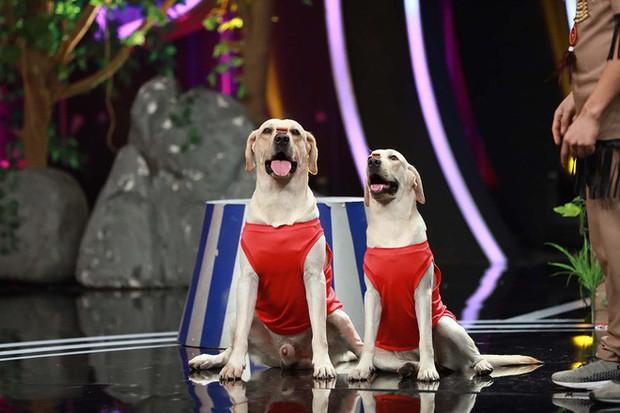 Chết cười Diệu Nhi làm tuesday trong chuyện tình của cặp đôi chú chó Củ Cải – Kim Chi - Ảnh 2.