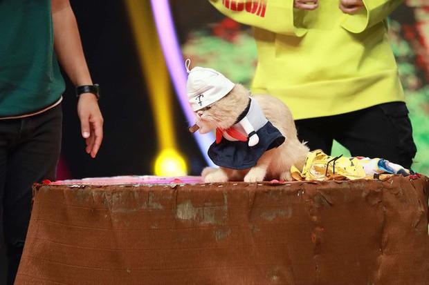 Chết cười Diệu Nhi làm tuesday trong chuyện tình của cặp đôi chú chó Củ Cải – Kim Chi - Ảnh 9.