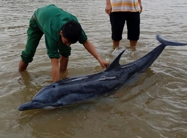 3 giờ dầm mình dưới nước lạnh để hộ tống chú cá heo lụy bờ ra lại biển - Ảnh 1.