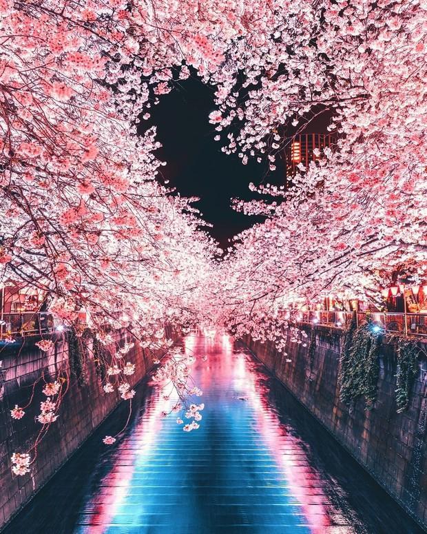 Tìm đâu ra nước nào được như Nhật Bản: Cả 4 mùa đều có nét đặc trưng riêng, đi vào lúc nào cũng thấy đẹp! - Ảnh 3.