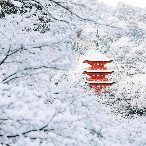 Tìm đâu ra nước nào được như Nhật Bản: Cả 4 mùa đều có nét đặc trưng riêng, đi vào lúc nào cũng thấy đẹp! - Ảnh 12.